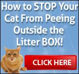 Cat Spraying No More